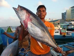 Maldivian tuna